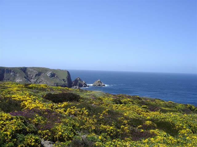 Ajoncs et bruyères sur la côte sauvage du nord Cap Sizun