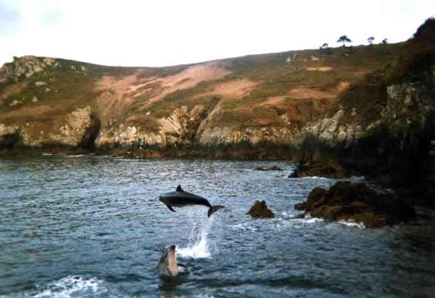 Les dauphins de Brézellec