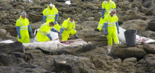 Baleineau échoué à l'Ile de Sein